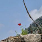 Auf dem Weg zur Festung Sveti Ivan, Kotor Montenegro