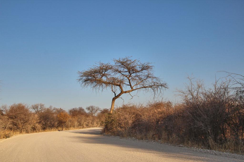 Schotterpiste im Etosha Nationalpark Namibia