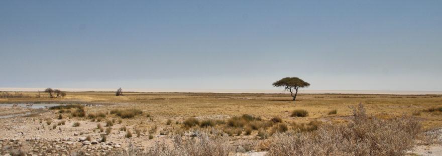 Lanschaft im Etosha Nationalpark zur Trockenzeit