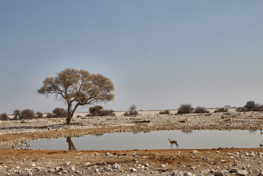Wasserloch Okaukuejo Etosha Nationalpark Namibia