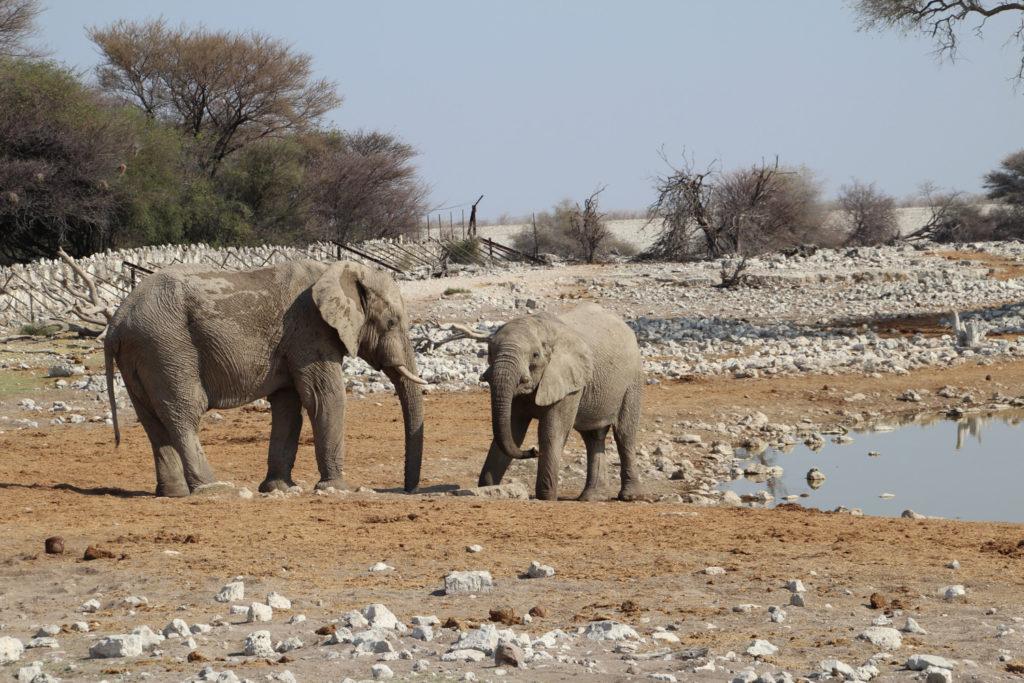 Elefanten am Wasserloch Okaukuejo Etosha Nationalpark Namibia
