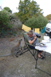 Narawntapu Nationalpark Tasmanien