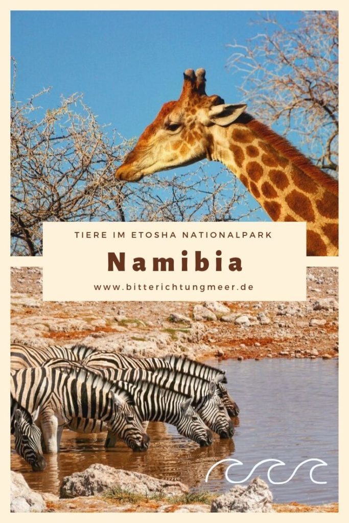 Namibia Pinterest Pin