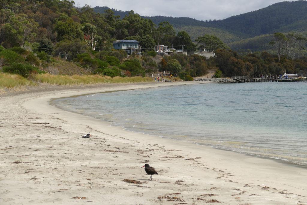 Camper Rundreise Tasmanien