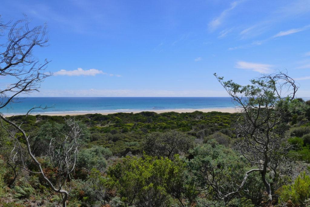 Sehenswürdigkeiten Tasmanien Ausblick vom Archers Knob