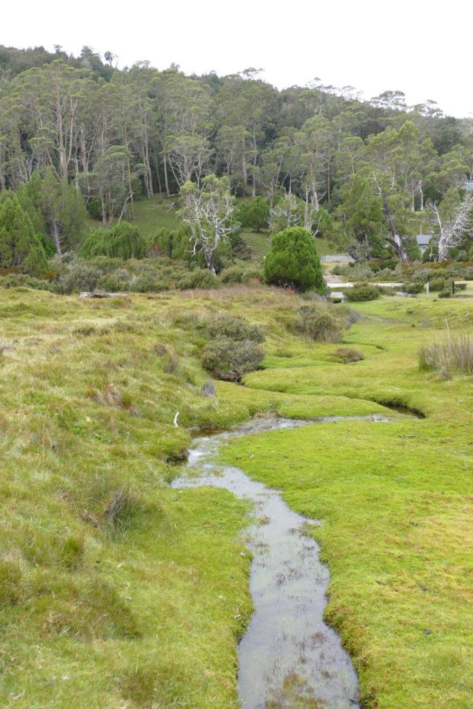 Cradle Mountain Nationalpark Bach