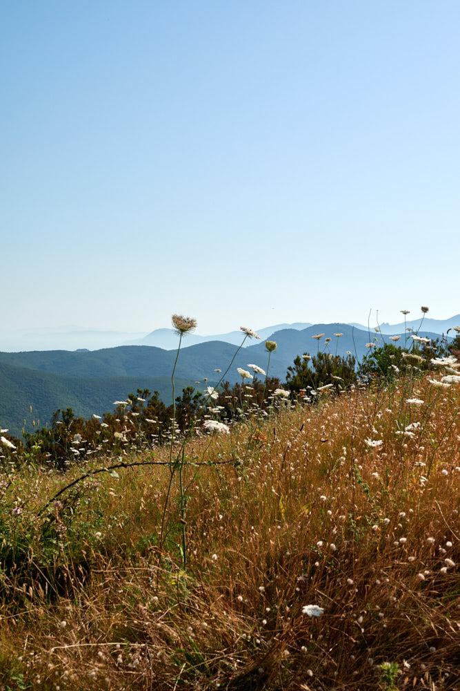 Elba Toskana Ausblick Meer