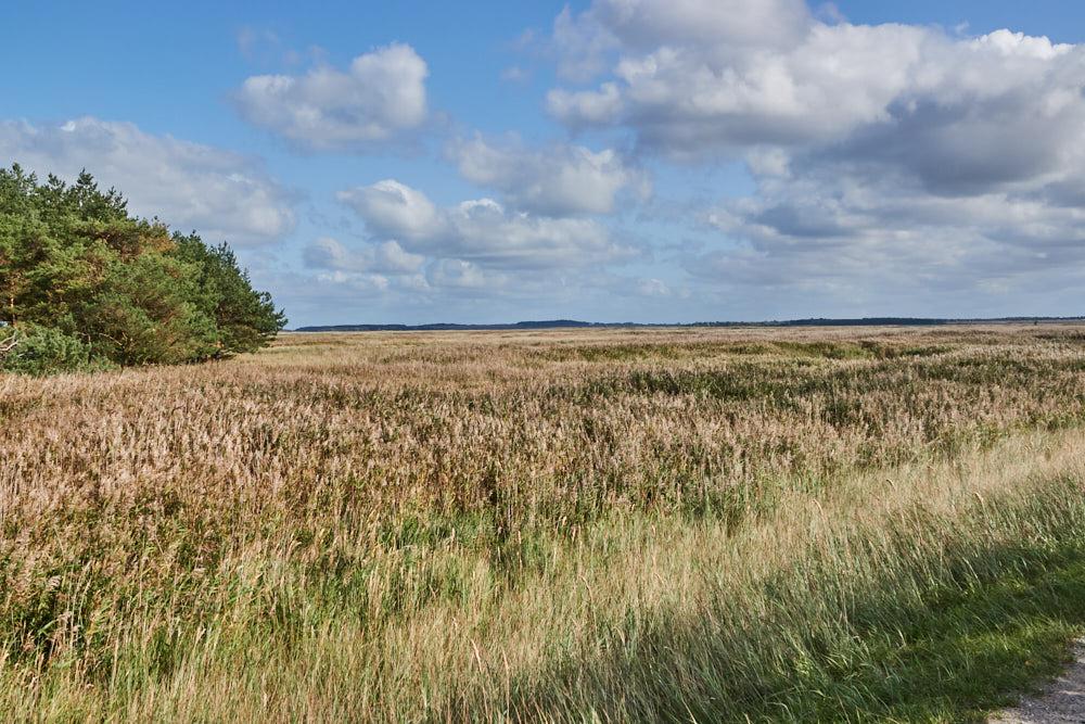 Nationalpark Hohe Düne Ostsee