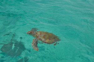 Mauritius Schildkröte Trou aux Biches