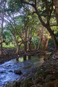 Mauritius Rochester Falls Fluss