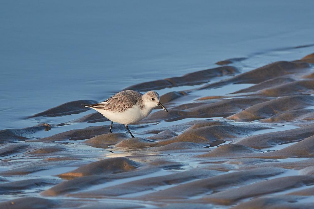 Vogelbeobachtung am Strand von Egmond aan Zee