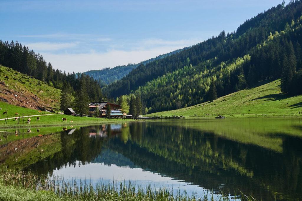 Steierischer Bodensee mit Wald